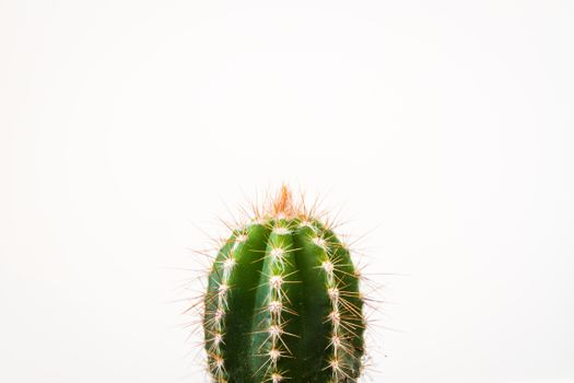 Photo free plant, green, cactus