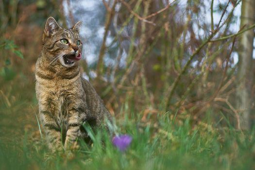 Фото бесплатно животные, кошка, сидеть