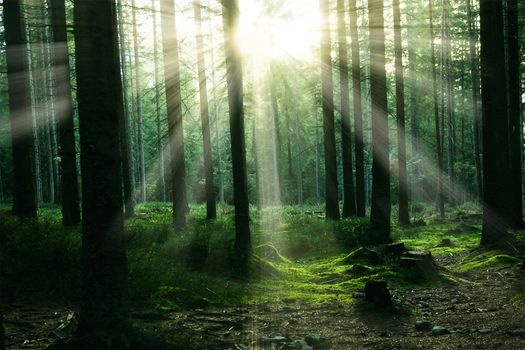 Заставки солнечный луч, деревья, слепящие лучи