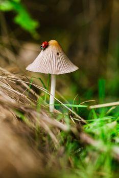 Фото бесплатно макросъёмка, грибок, ботаника