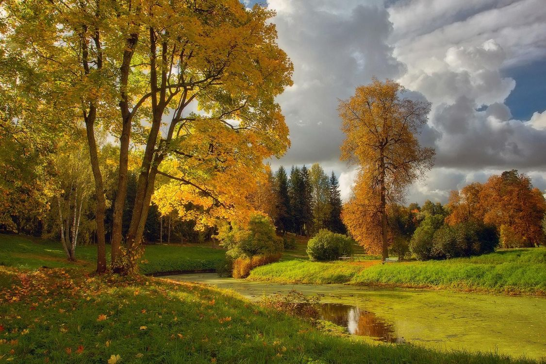 Photos for free In Pavlovsk, autumn, pond - to the desktop