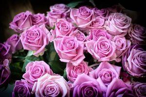 Фото бесплатно цветы, розы, флора