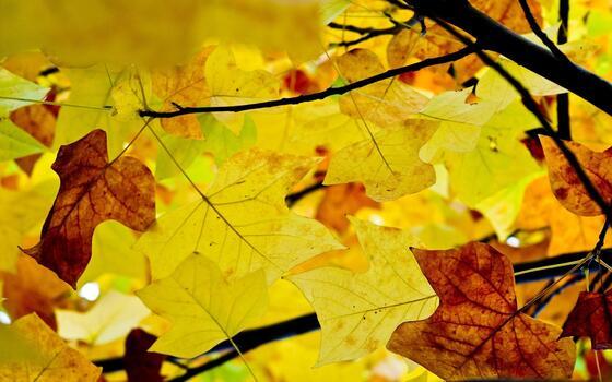 Фото бесплатно солнечный свет, листья, ветвь