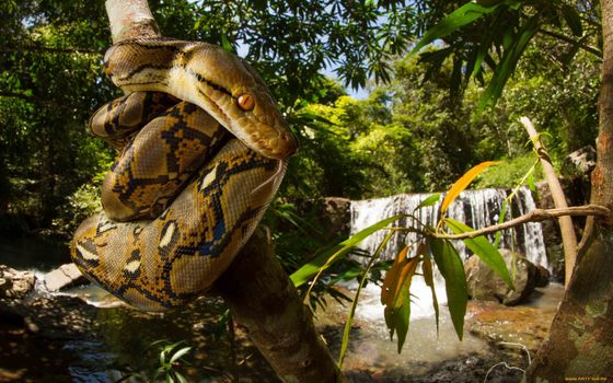 Photo free snake, tree, sculpture