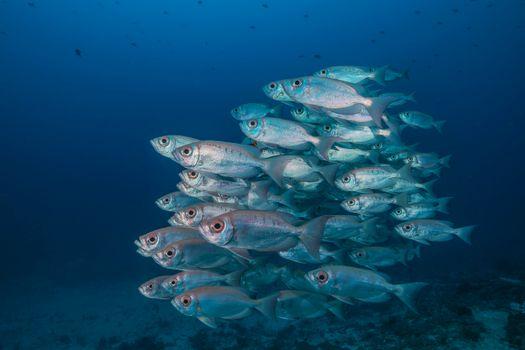 Фото бесплатно Индонезия, море, морское дно