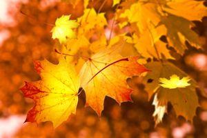 Заставки Осень, листья, природа