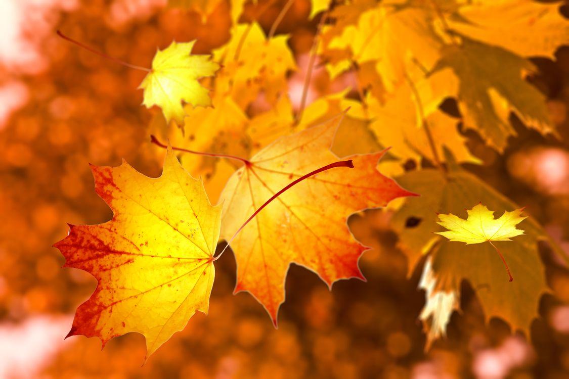 Фото бесплатно Осень, листья, природа - на рабочий стол