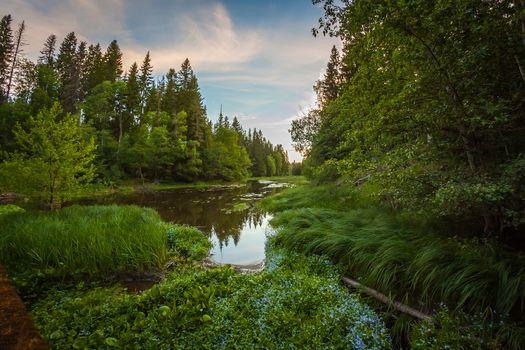 Photo free sky, trees, summer