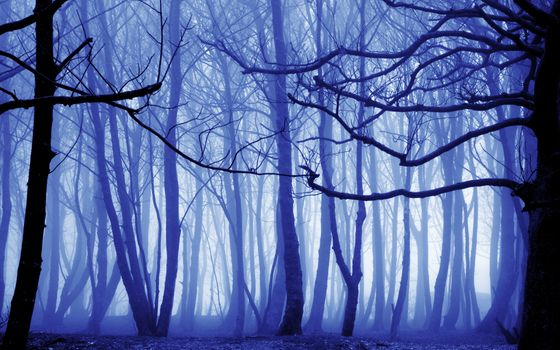 Photo free fog, forest, trunks of trees