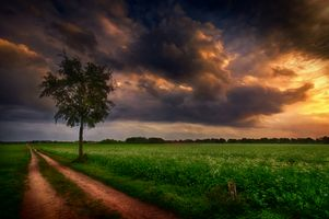Фото бесплатно дерево, закат, дорога