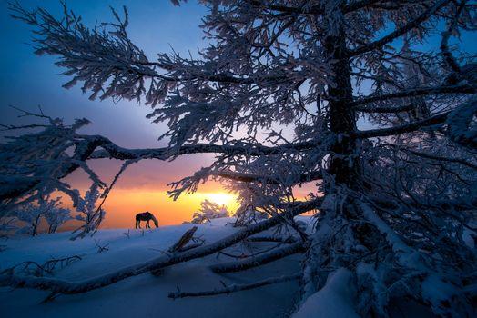 Фото бесплатно закат, горы, пейзаж