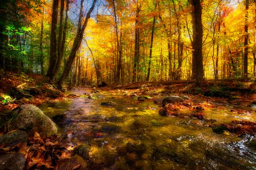 Фото природа, осень больших размеров