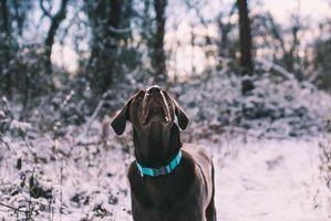 Бесплатные фото лабрадор,собака,прогулка,снег,labrador,dog,walk