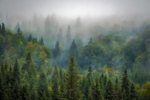 Фото бесплатно пейзажи, умеренный хвойный лес, пейзаж