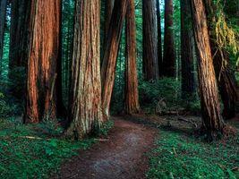Заставки лес, деревья, тропинка