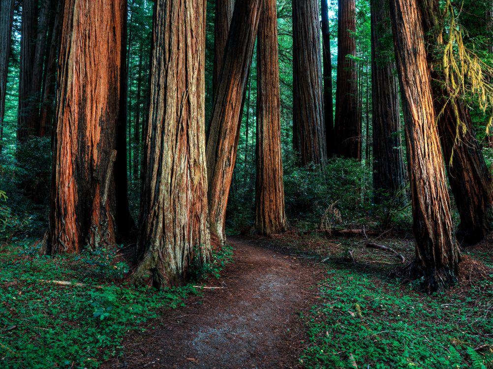 Фото на телефон тропинка, лес
