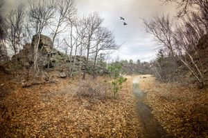 Бесплатные фото осень,парк,тропинка,поляна,скалы,деревья,природа