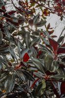 Бесплатные фото растения,ветви,солнечный свет,plant,branches,sunlight