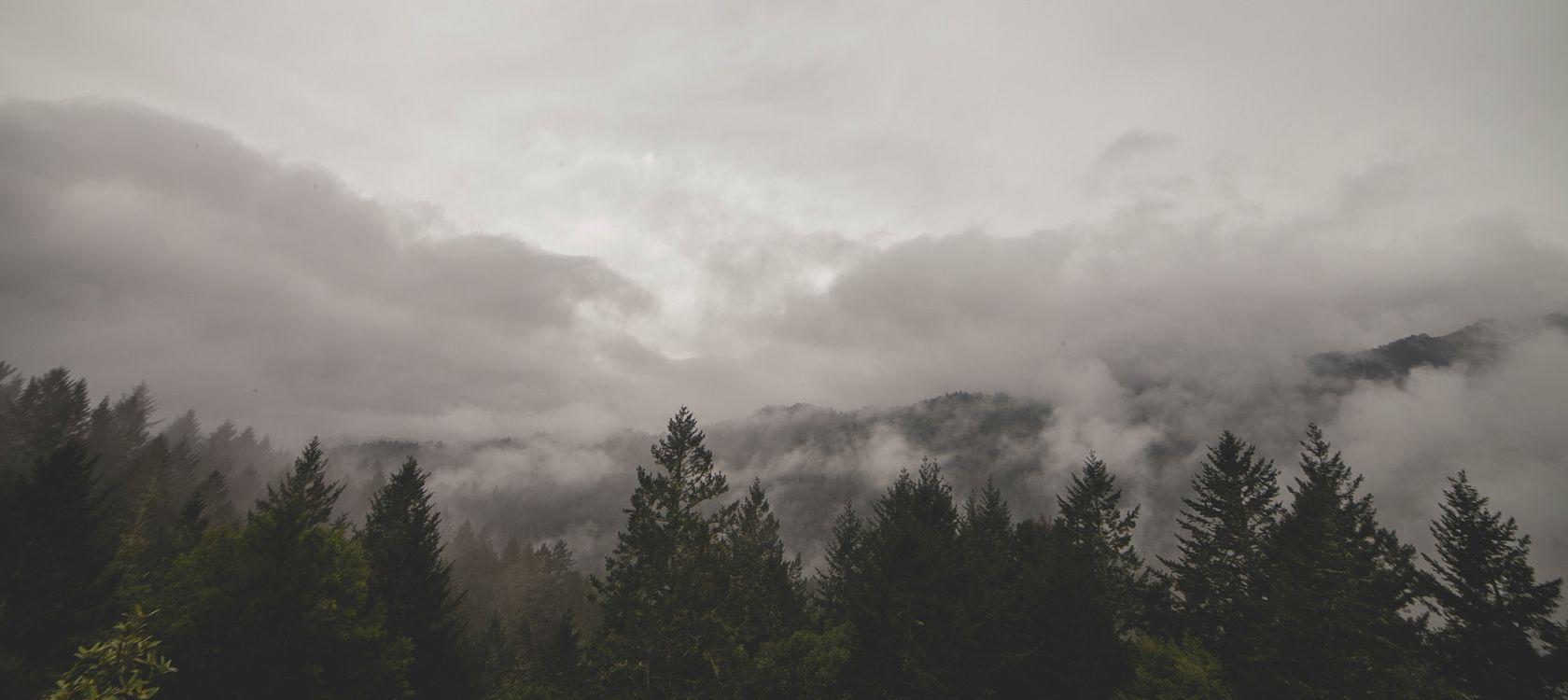 Деревья в тумане · бесплатное фото