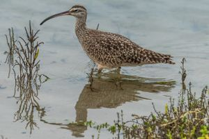 Фото бесплатно птицы, клюв, вода