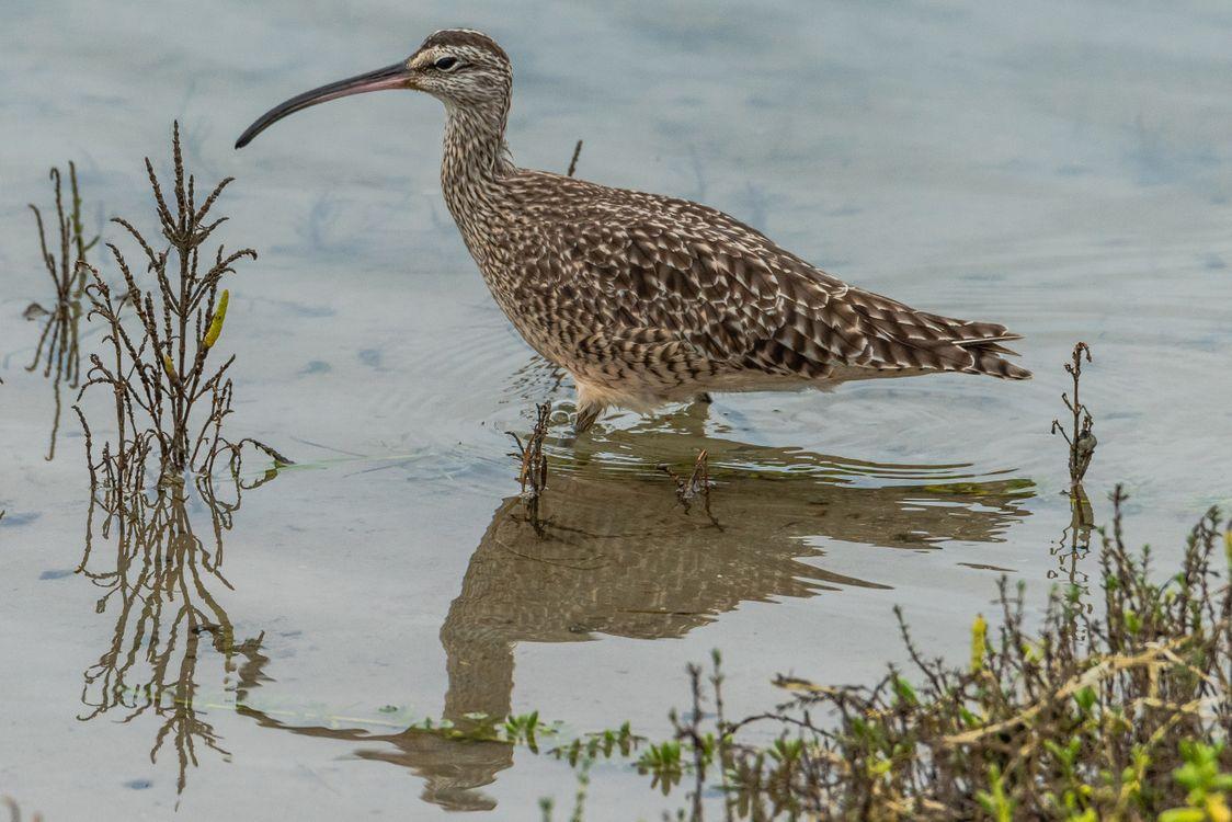 Фото птицы клюв вода - бесплатные картинки на Fonwall