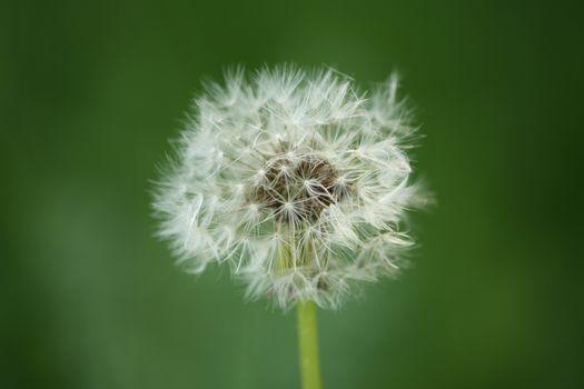 Photo free terrestrial plant, wildflower, close-up
