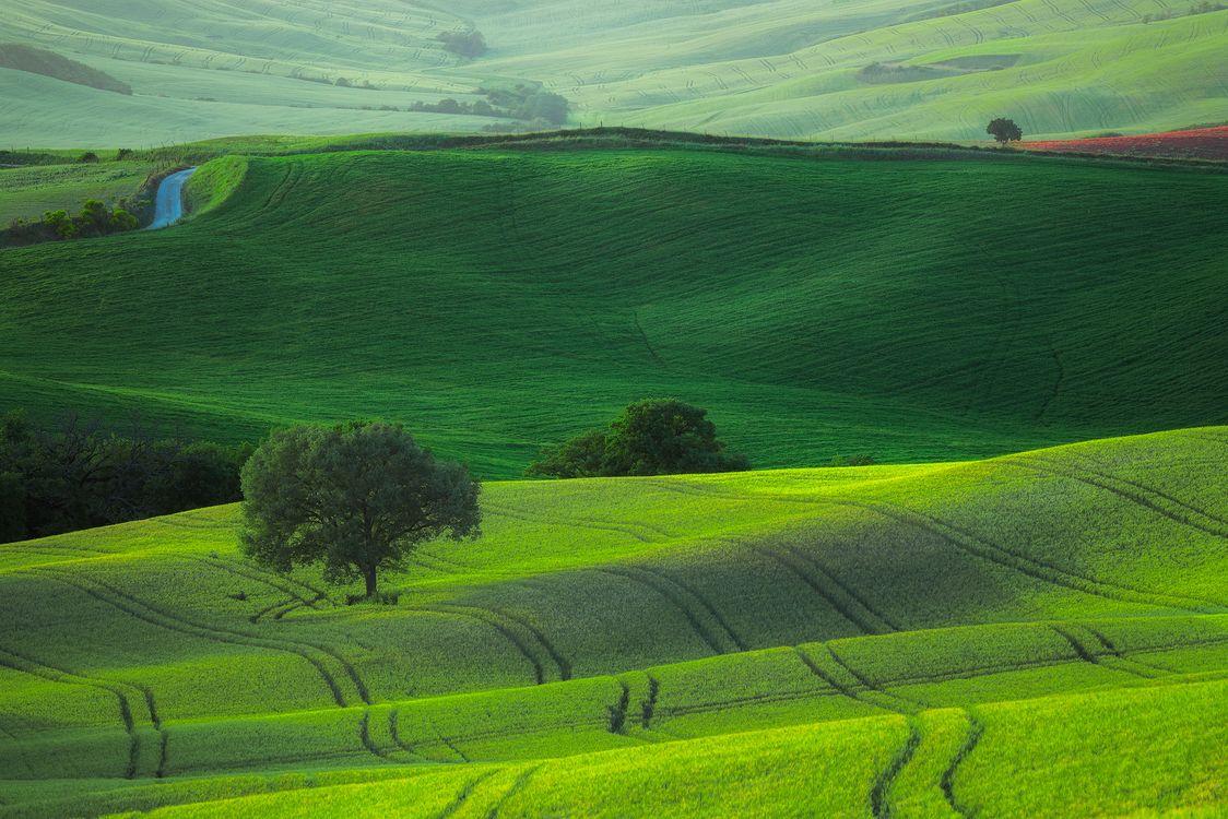 Фото бесплатно полеTuscany, пейзаж, трава - на рабочий стол