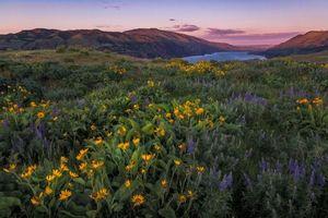 Бесплатные фото Columbia River Gorge, Oregon, закат, озеро, поле, цветы, пейзаж