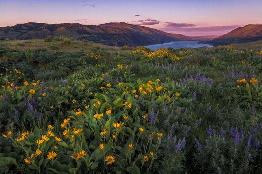 Фото бесплатно Columbia River Gorge, Oregon, закат, озеро, поле, цветы, пейзаж