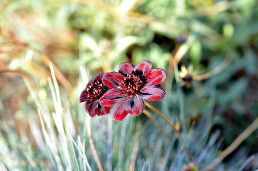 Фото бесплатно цветущее растение, растение, крупным планом