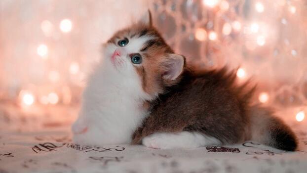 Photo free boke, cute kitten, glare