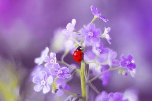Картинки на заставку цветок, насекомое бесплатно