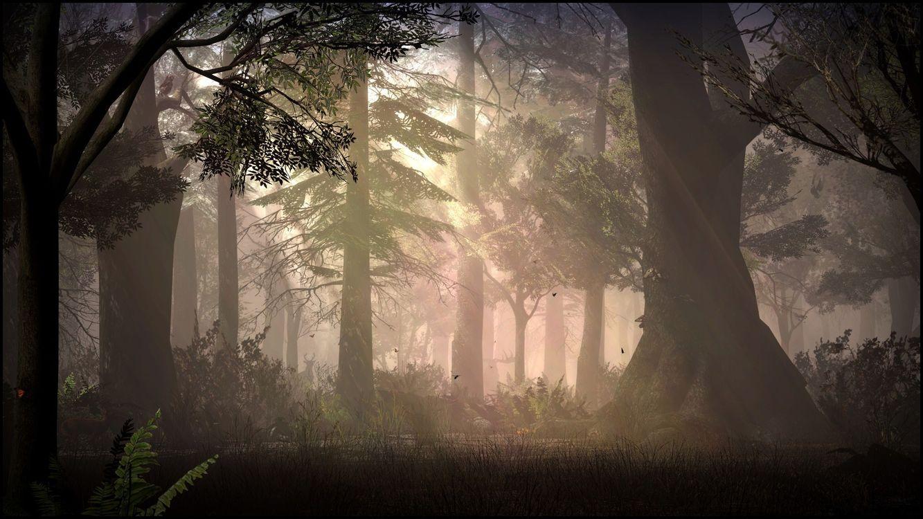 Фото солнечный свет лес ночь - бесплатные картинки на Fonwall