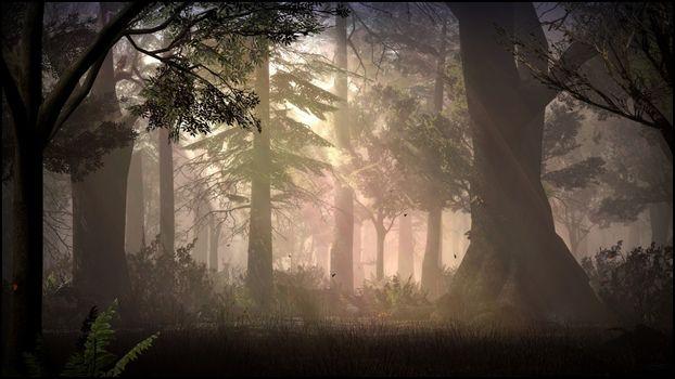 Фото бесплатно солнечный свет, лес, ночь