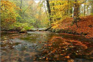 Бесплатные фото осень,лес,деревья,река,пейзаж,природа