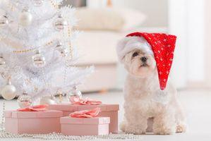 Фото бесплатно новый, рождество, год