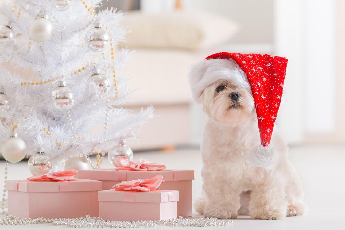 Фото бесплатно новый, рождество, год - на рабочий стол