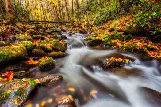 Фото бесплатно осень, лес, Смоки Маунтинс
