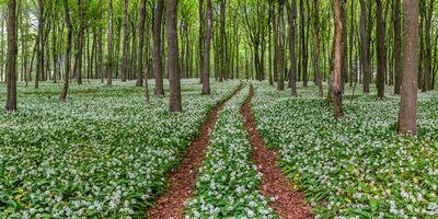 Фото бесплатно лес, деревья, цветы, природа, дорога