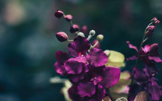 Фото бесплатно лепестки, цветок