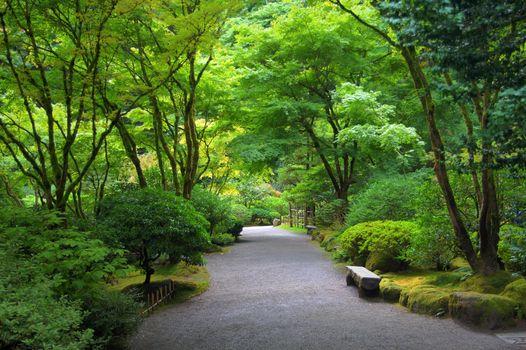 Фото бесплатно Japanese garden, Японский сад, парк