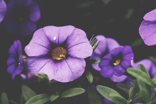 Фото бесплатно Виола, цветы, наземное растение
