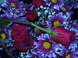 Заставки цветы,цветочный,цветочная композиция,флора,красивые,красивый,цвет