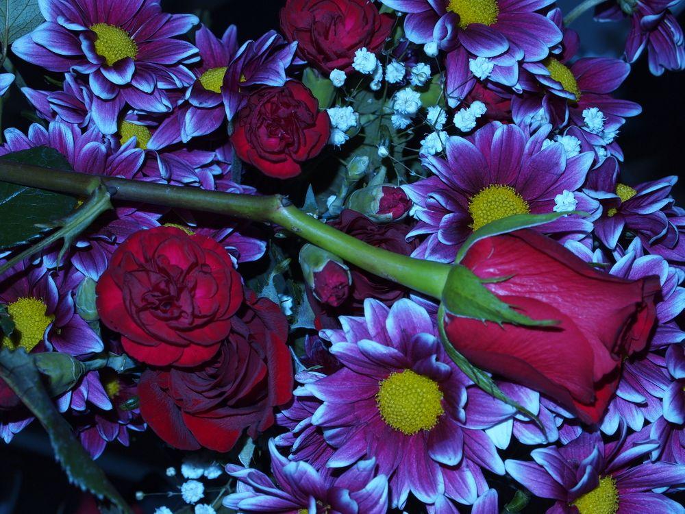 Фото бесплатно хризантема, роза, красивый букет - на рабочий стол
