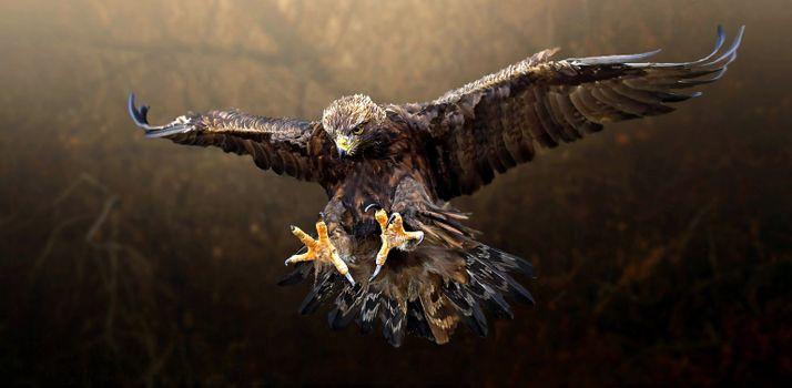 Заставки Golden Eagle, хищник, панорама