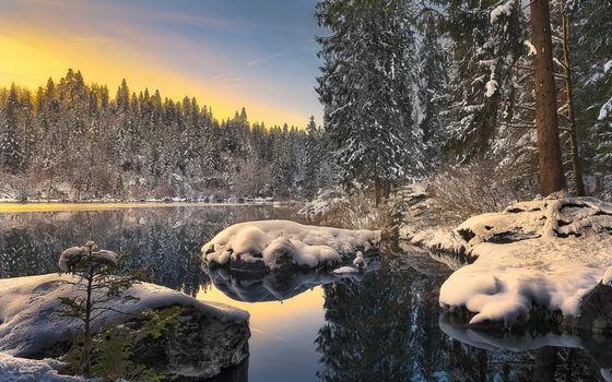Photo free wilderness, wildlife, winter