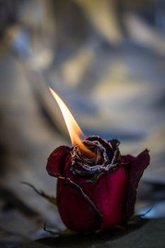 Пламя из розы · бесплатное фото