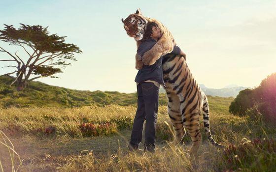 Photo free tiger, friends, friendship