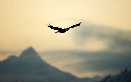 Фото бесплатно природа, полет, птица