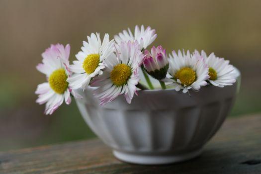 Фото бесплатно цветы, чаша, посуда столовая